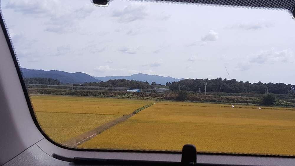 차창으로 보이는 들녘의 가을 곡식들도 풍성하니...농부들에게도 축복을...